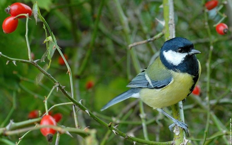 Les oiseaux en fond d 39 cran et la vid o de jean pierre garino for Images du printemps gratuites