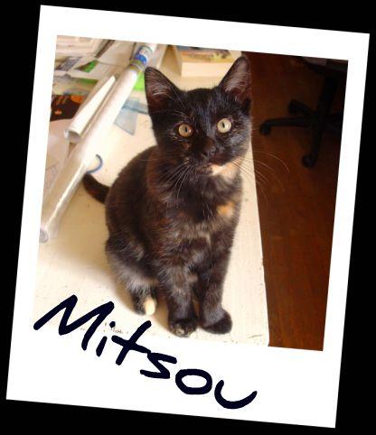 Mitsou dans Le Miroir des Chats 60910310