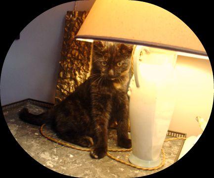 La belle ! dans Le Miroir des Chats 60983510