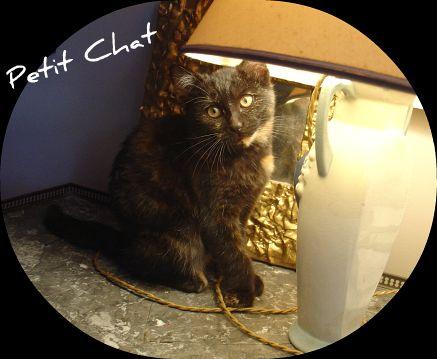 P'tit Chat ! dans Le Miroir des Chats 61439110