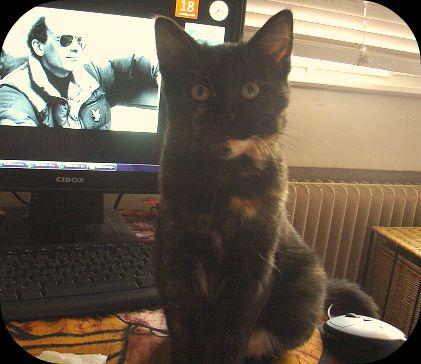 Le pouvoir des chats !  dans Le Miroir des Chats 61996310