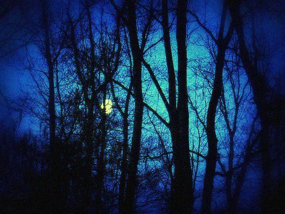 Lune dans le bois...  dans Le jardin des souvenirs dsc00713