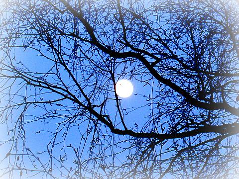 Prendre un bain de Lune, un soir...  dans Le jardin des souvenirs dsc00816