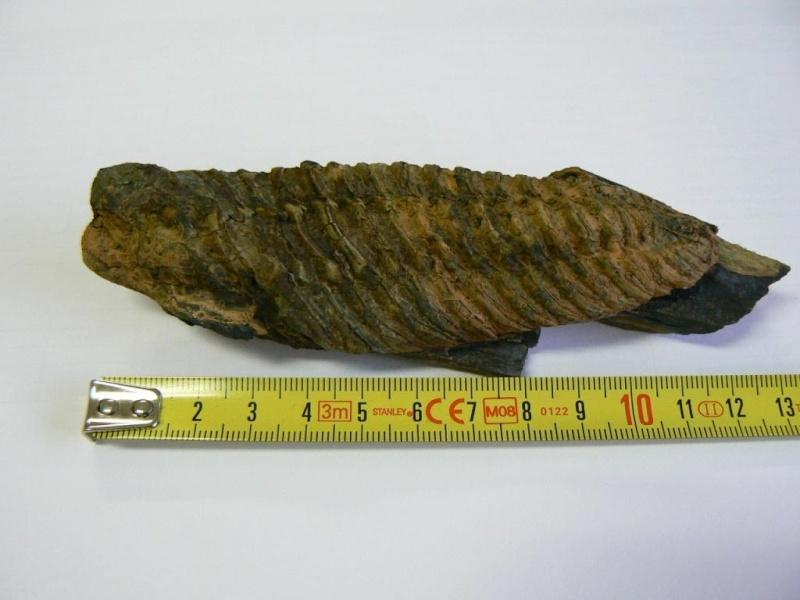 fossil21.jpg