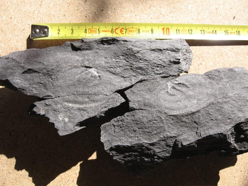 fossil22.jpg