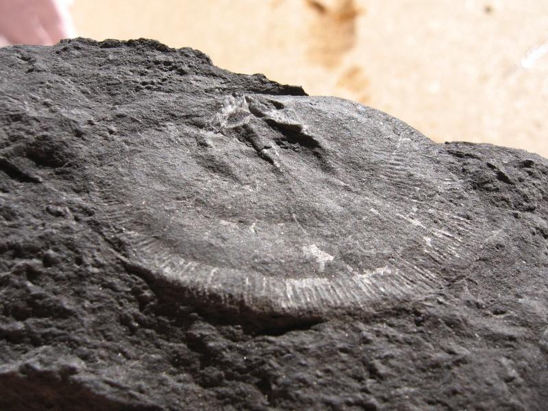 fossil27.jpg