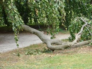 branch10