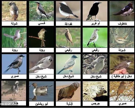 أنواع الطيور وأسمائها بالصور