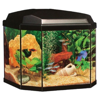 aquarium 30 litres poisson rouge. Black Bedroom Furniture Sets. Home Design Ideas