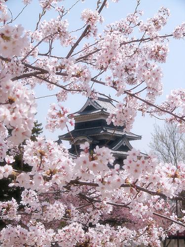 sakura le cerisier du japon. Black Bedroom Furniture Sets. Home Design Ideas