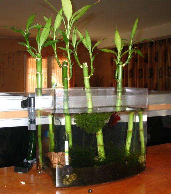 Quel type de couvercle utiliser verre plexi - Quel terreau pour bambou ...
