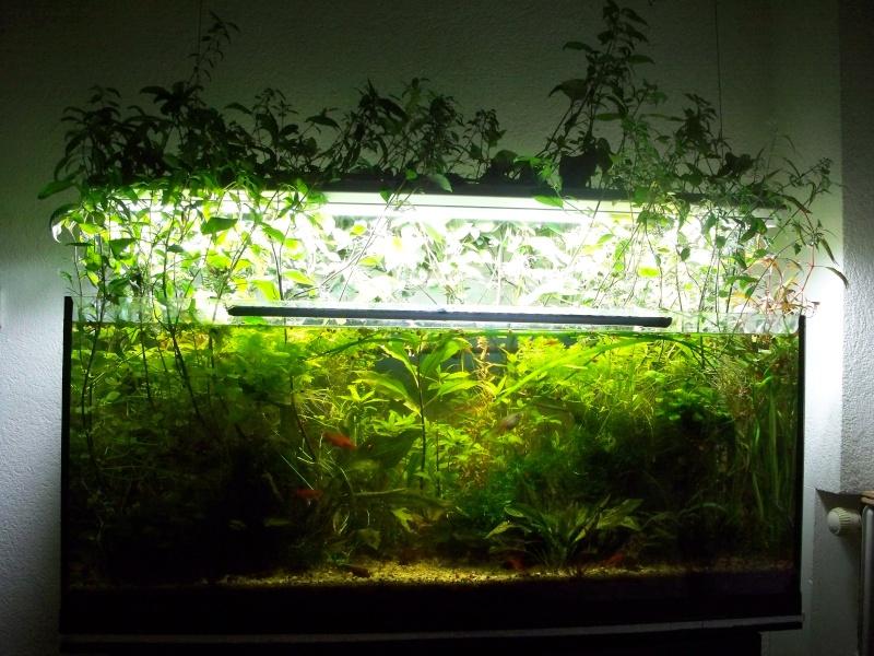 Mon 240l page 2 for Aquarium ouvert