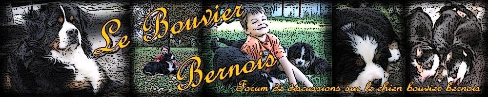 LE BOUVIER BERNOIS