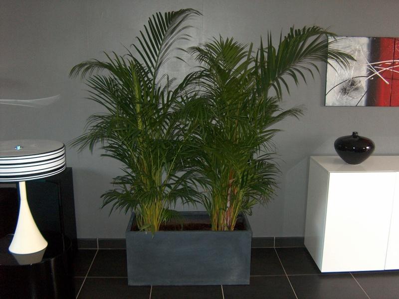 bac rectangulaire pour plantes d 39 int rieur page 2. Black Bedroom Furniture Sets. Home Design Ideas