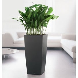 Salon s jour ancolies for Pot de plante design