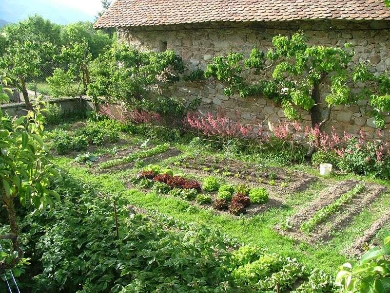 Plantes et arbustes for Plantes et arbustes