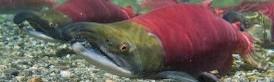 Washington Salmon Anglers