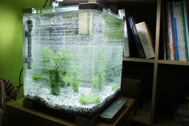 Acheter aquarium 40l for Aquarium a acheter
