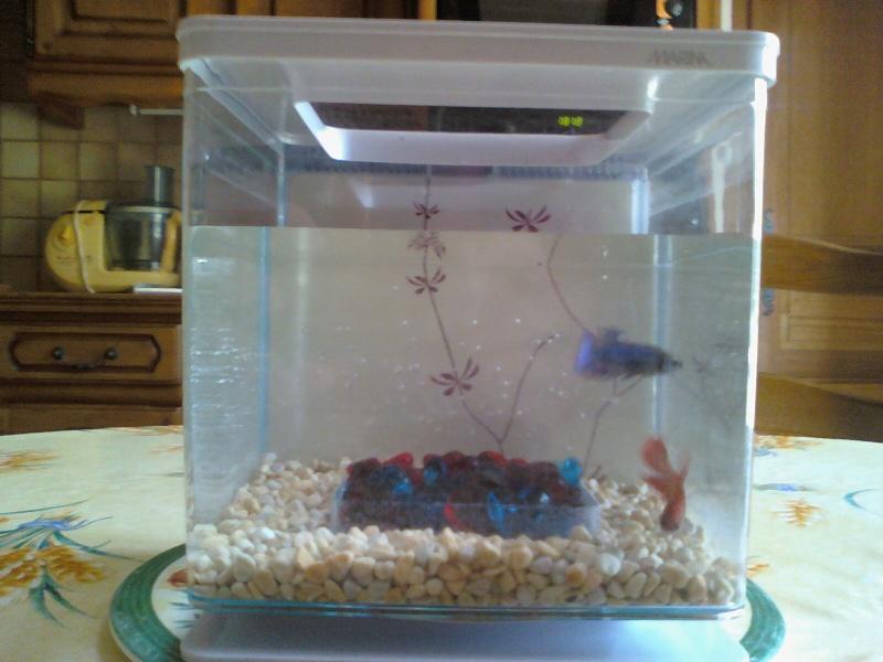 Vends betta splendens avec ou sans aquarium 91 for Filtre aquarium 20l