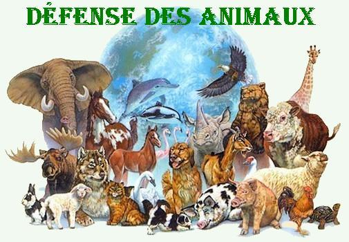 Defense des animaux