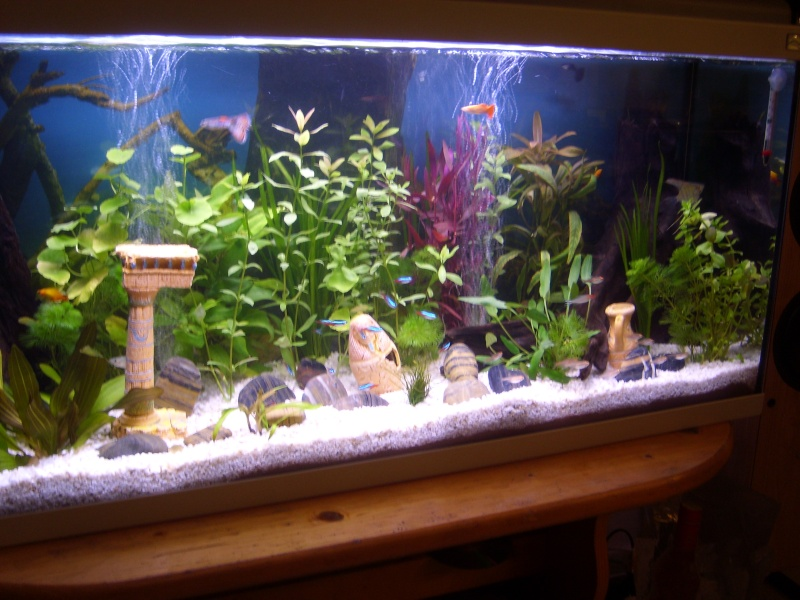 Bulleur aquarium for Aquarium poisson rouge avec pompe