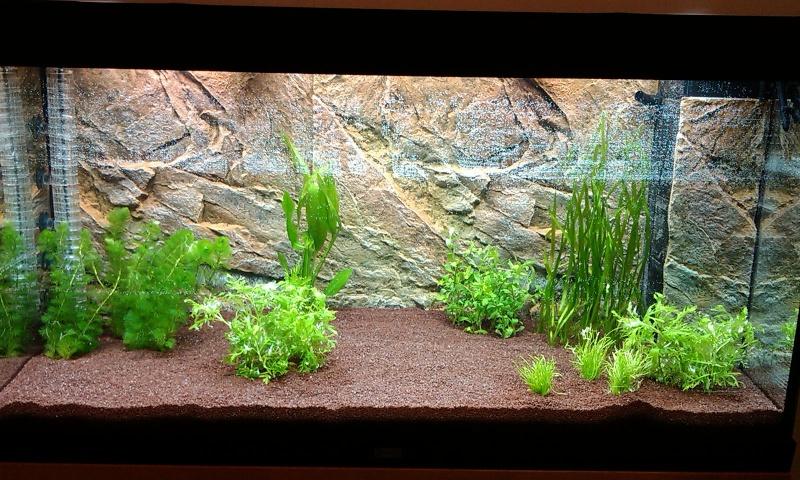 décor aquarium 300l